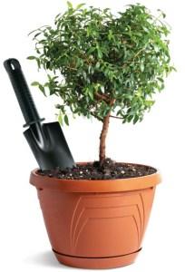 revista-minha-casa-abril-aprenda-transplantar-plantas-00