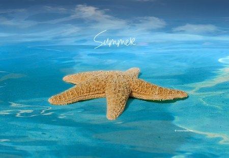Nice Girl Wallpaper Hd Summer Fish Amp Animals Background Wallpapers On Desktop