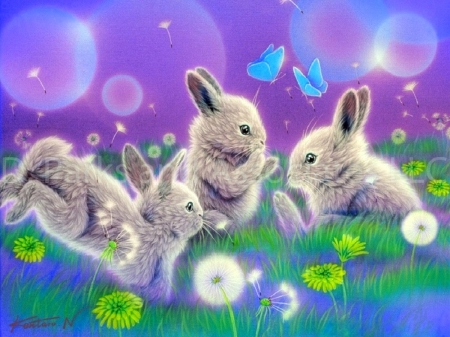 Cute White Baby Rabbits Wallpapers Funny Moments Other Amp Animals Background Wallpapers On