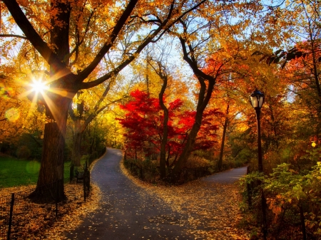 Fall Walk Wallpaper Autumn Park Other Amp Nature Background Wallpapers On