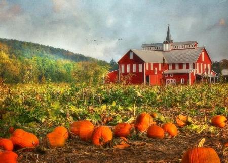 Fall Desktop Wallpaper With Pumpkins Pumpkin Farm Farms Amp Architecture Background Wallpapers