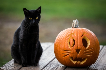 Free Fall Season Desktop Wallpapers Halloween Kitty Cats Amp Animals Background Wallpapers On