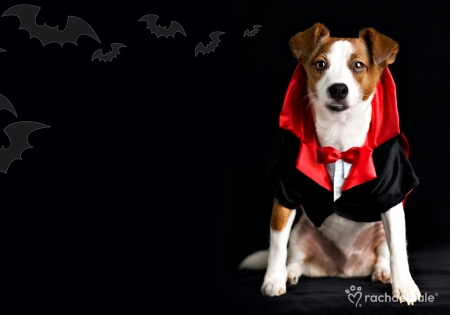 Cute Wallpapers Of Dogs And Puppies Happy Halloween Dogs Amp Animals Background Wallpapers On