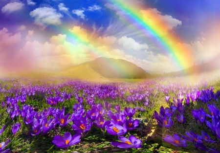 Carpet Of Spring Flowers Rainbows Nature Background