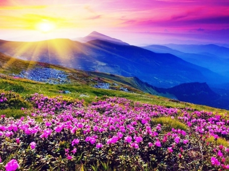 Ooty Hd Wallpapers Wildflowers On A Mountain Mountains Amp Nature Background