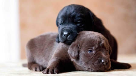 Free Cute Baby Wallpapers For Desktop Cute Puppies Dogs Amp Animals Background Wallpapers On