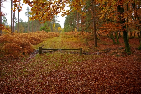 Free Desktop Wallpaper Fall Season New Forest In Hampshire England In Fall Forests Amp Nature
