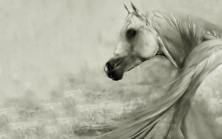 Fantasy Sad Girl Wallpaper White Horse Horses Amp Animals Background Wallpapers On