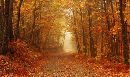Free Fall Cat Wallpaper Autumn Path Forests Amp Nature Background Wallpapers On