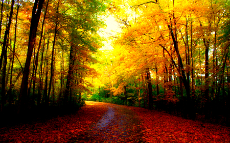Fall Leaves Pathway Computer Wallpaper Beautiful Autumn Forests Amp Nature Background Wallpapers