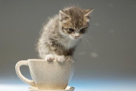 Cute Coffee Mug Wallpaper A Coffee Cup Full Cuteness Cats Amp Animals Background