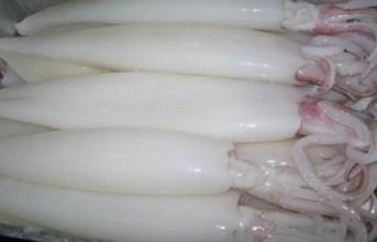 Xuất khẩu mực, bạch tuộc tăng mạnh