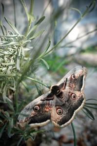 promenade-caleches-camargue-papillons
