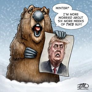 Toonink5964_Groundhog(sqcolour)