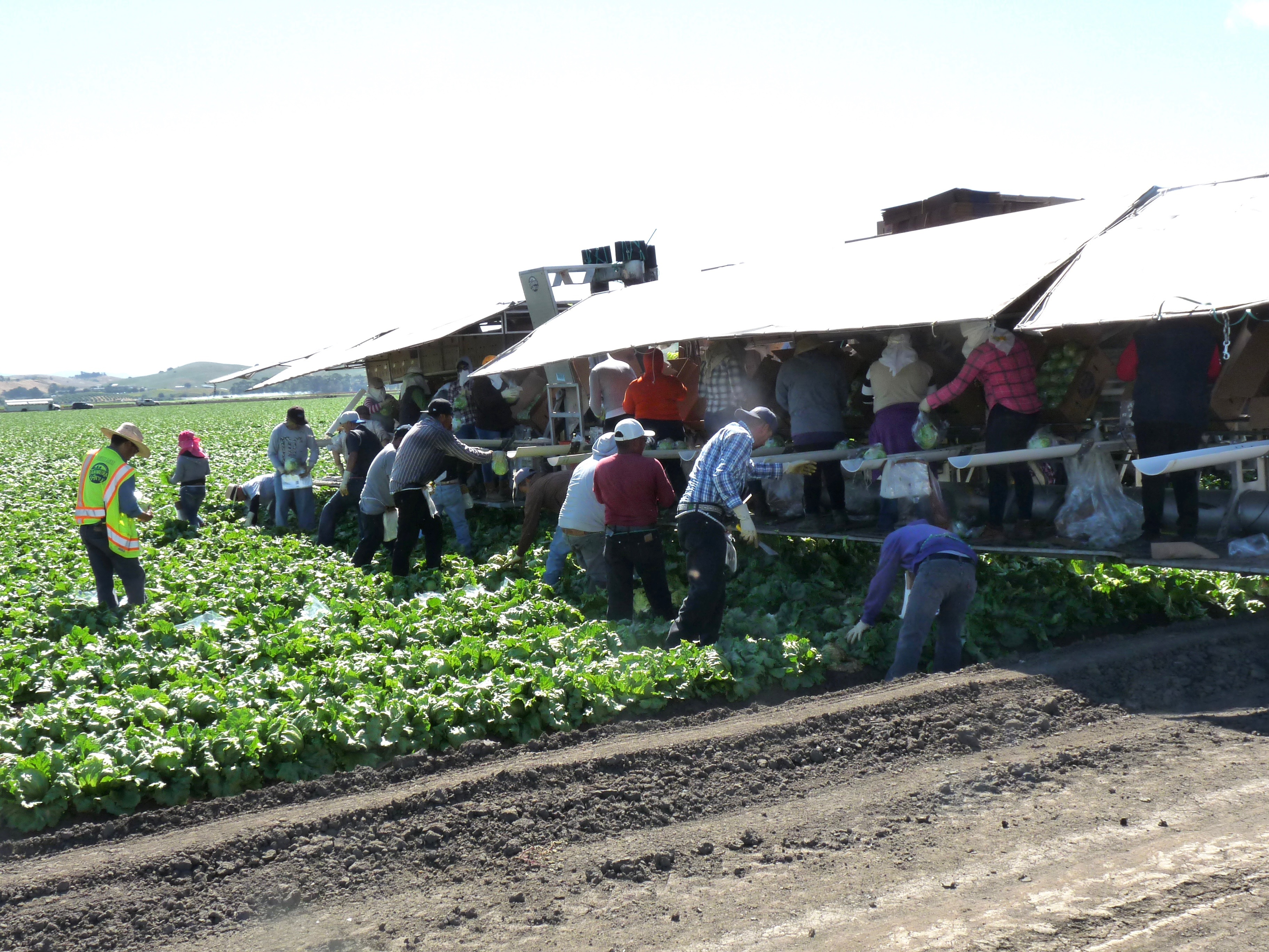 California farm workers on edge over historic overtime bill