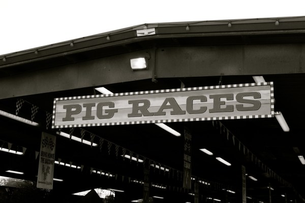 pig races sign black and white 1024x682