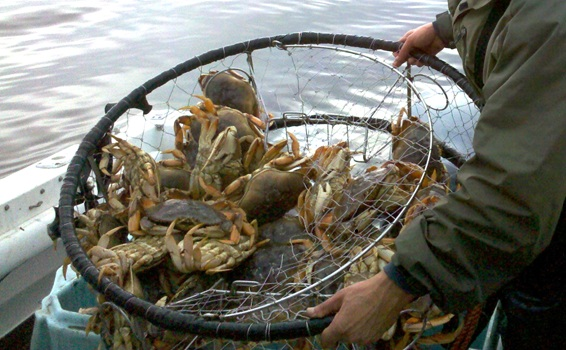 More crabbing areas opening soon for Crab fishing game