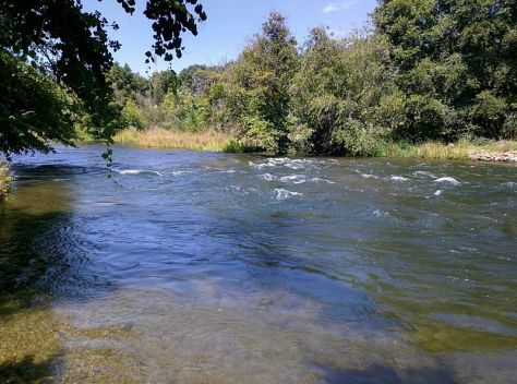Federal program hopes to increase american river fish counts for American river fishing