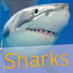 HB shark