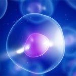 Le cellule imitano i tuoi gesti…Educhiamole con il nostro BUON esempio !!!!