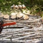 白樺の樹皮を使った火口作りとイタリア料理に挑戦【写風人の駒ヶ根アウトドアライフ~第3章#1】