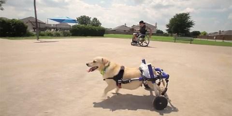 kleenex_wheelchair_cotw