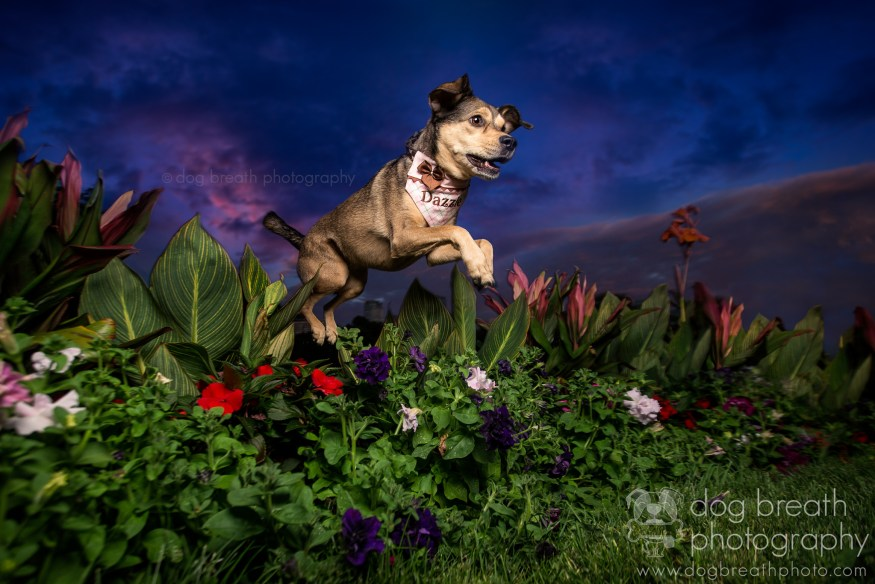 dog-breath-photography-kaylee-greer-2-cotw
