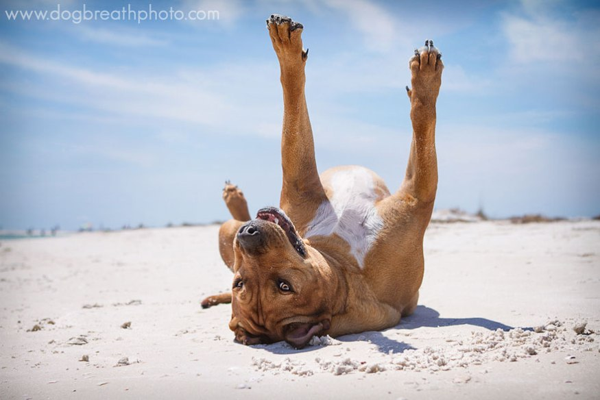 dog-breath-photography-kaylee-greer-21-cotw