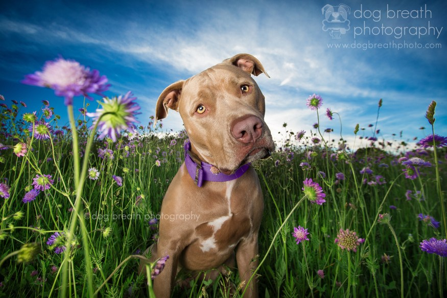 dog-breath-photography-kaylee-greer-39-cotw