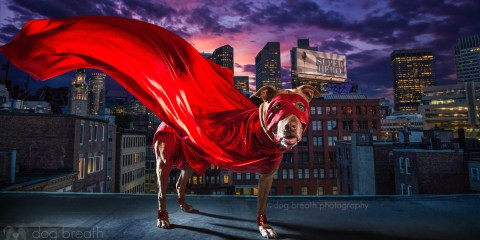 dog-breath-photography-kaylee-greer-44-cotw