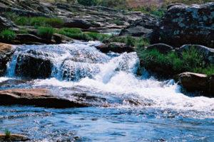 Resultado de imagem para O que fizemos da água?Paiva Netto