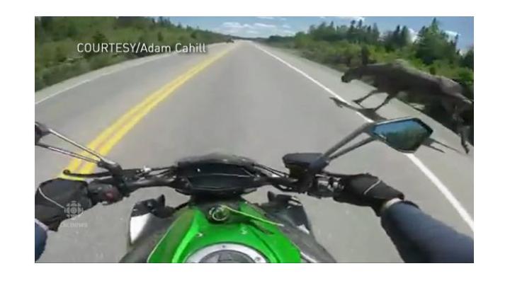 Motorcycle + moose = near escape