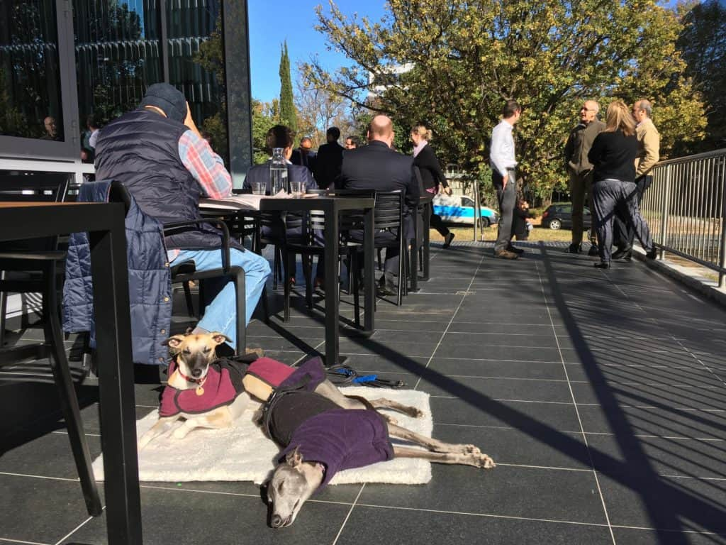 Milk Crate Canberra Canberra Dog Friendly Cafes Our Favourites Canberra Dog Walks