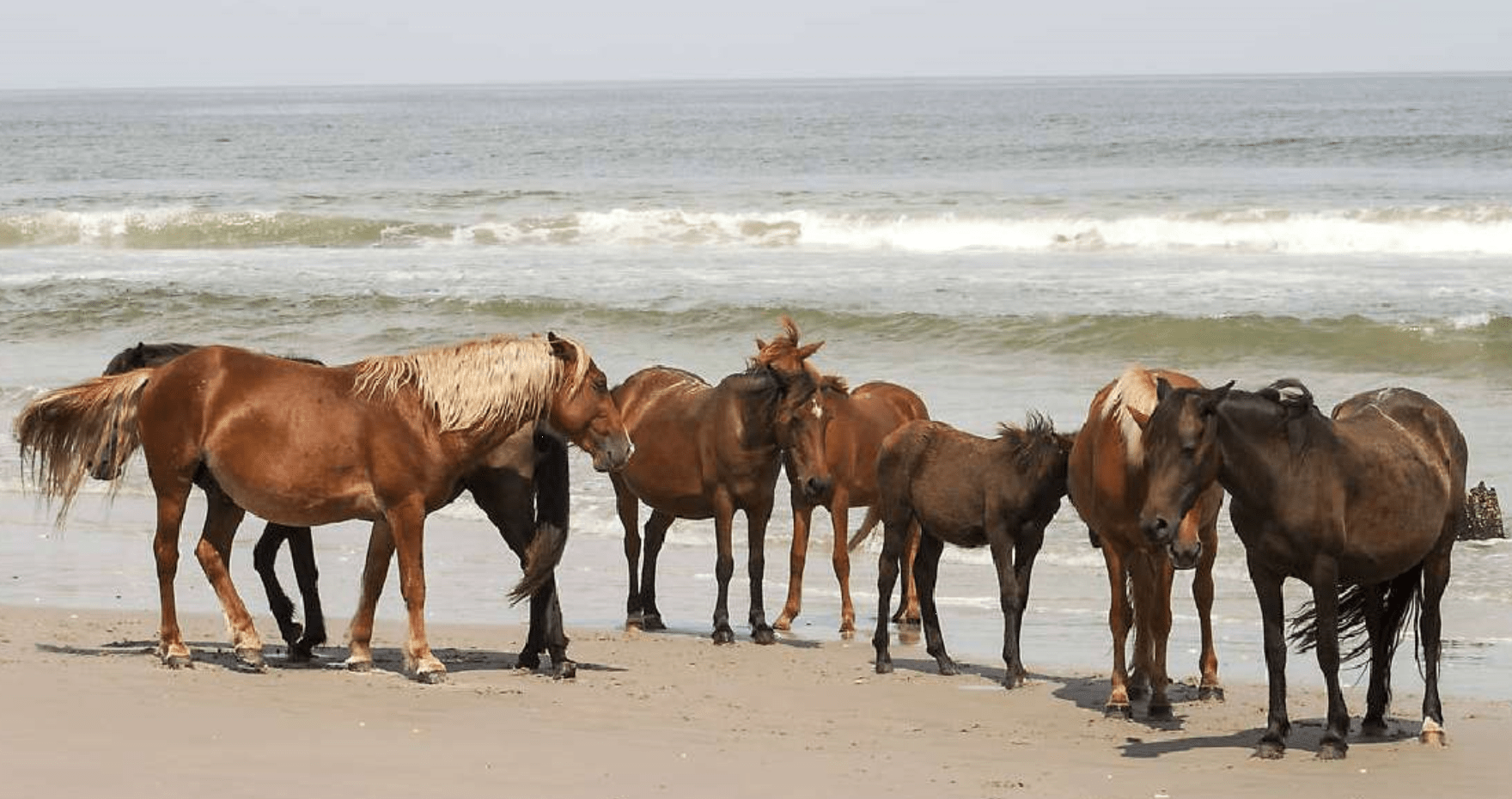 Horsing around on the beautiful Outer Banks beach