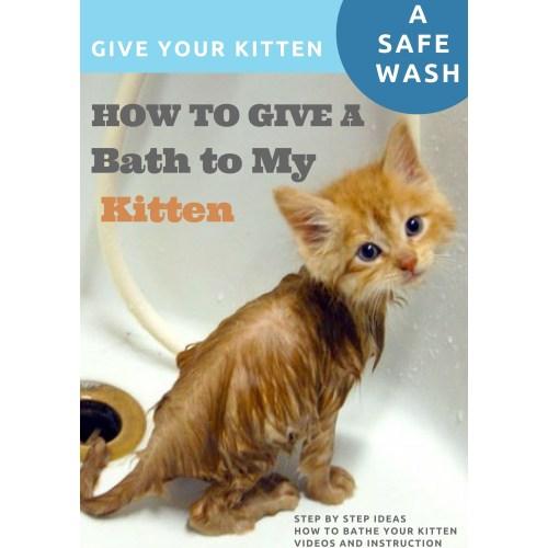 Medium Crop Of How To Bathe A Kitten