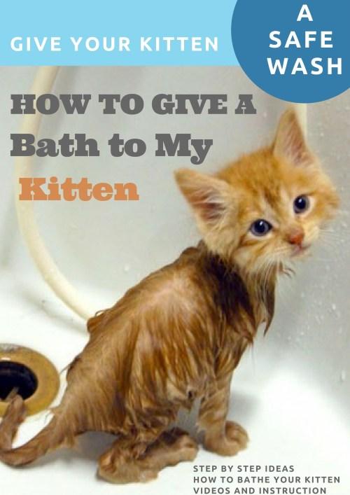 Medium Of How To Bathe A Kitten