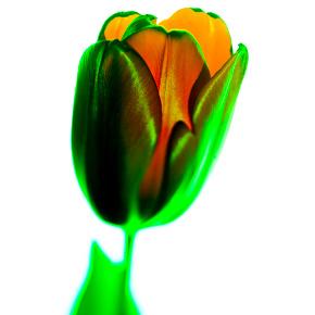 Çiçek 3 by Bennu Gerede