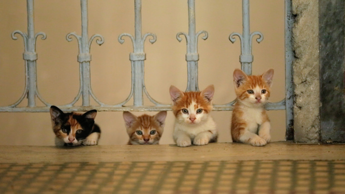 Cats of Istanbul, photo from Kedi documentary