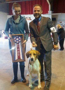 Calendar English Foxhound Dog Breed Directory And Generaly Information Canadas Monticello New York Kennel Club – Sunday March 12 2017
