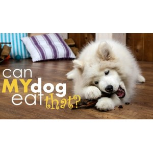 Captivating Foods Dogs Can Eat Canines Dog Can T Catch Food Instagram Dog Can T Catch Food List