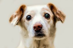 Small Of Staph Infection In Dogs