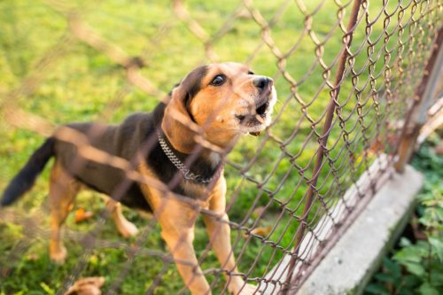 Medium Of Dogs That Dont Bark