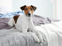 Why Does My Dog Pee on My Bed? | Canna-Pet