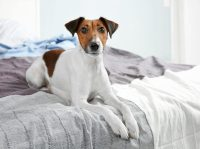 Why Does My Dog Pee on My Bed?   Canna-Pet