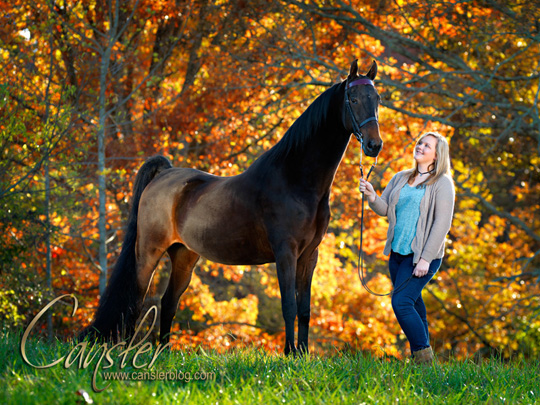 Kentucky Fall Wallpaper A Beautiful Fall Evening In Chattanooga With Horses And