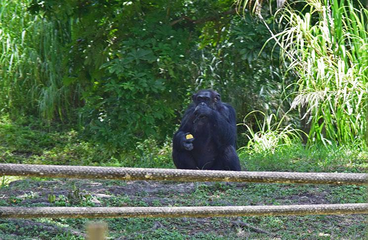 zoo-de-miami-36