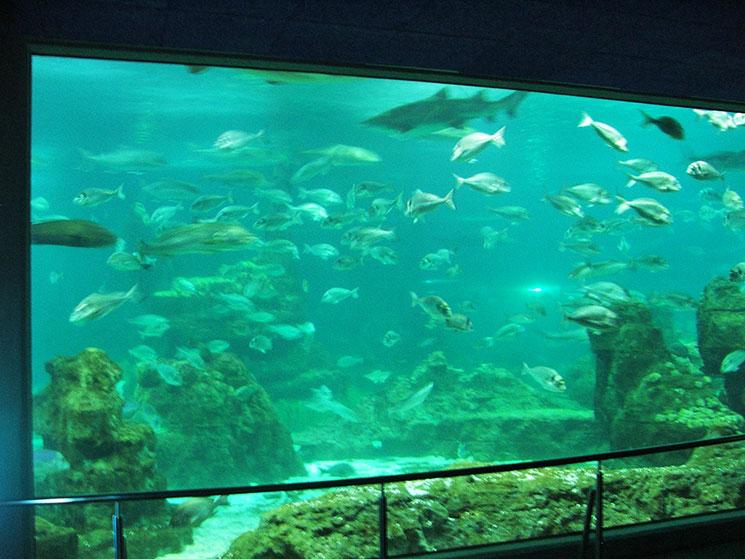 aquario-de-barcelona-2