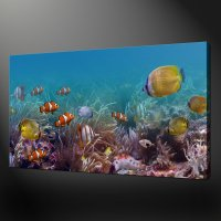 Tropical Fish Wall Art Pictures to Pin on Pinterest ...