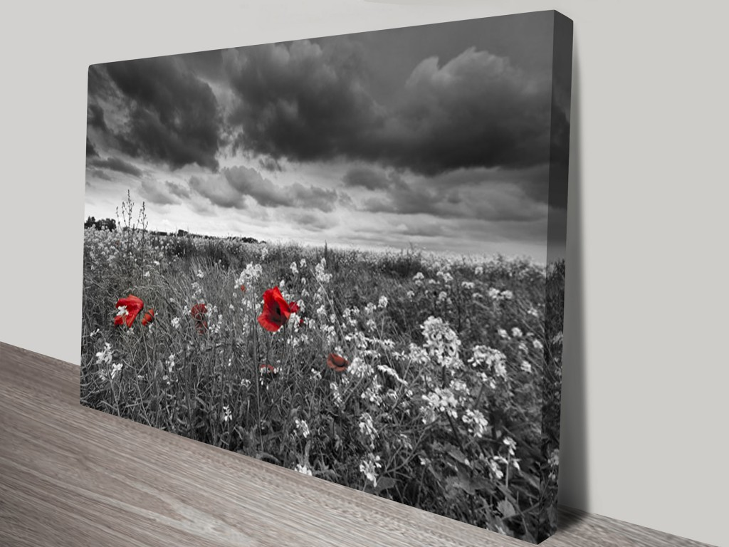 Black And White Canvas Prints The Red Poppy Field Black And White Canvas Print