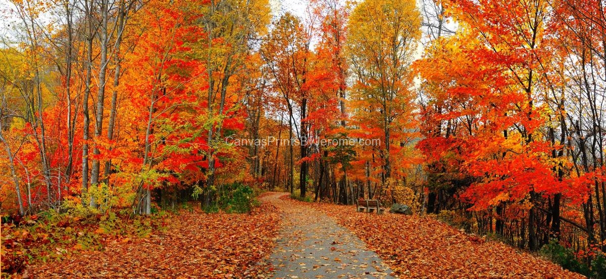 Panoramic Wallpaper Fall Fall Color Canvas Prints By Jerome